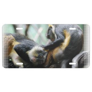 wolfs-guenon-11.jpg license plate