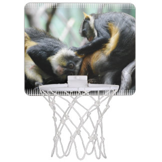 wolfs-guenon-11.jpg mini basketball hoops