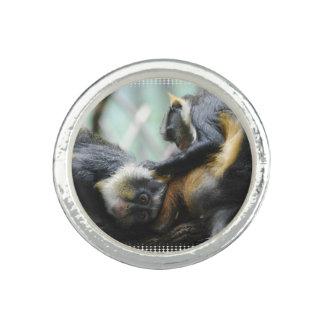 wolfs-guenon-11.jpg photo ring