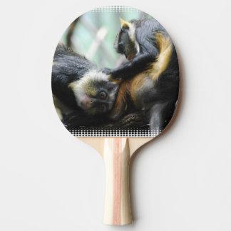 wolfs-guenon-11.jpg Ping-Pong paddle