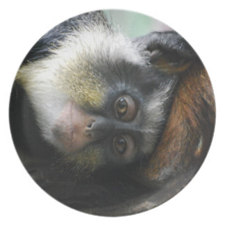 Wolf's Guenon Plate