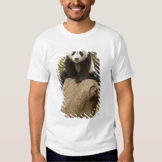 Wolong Panda Reserve, China, Baby Panda on top T Shirt