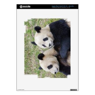 Wolong Reserve, China, Giant panda hugging iPad 3 Skin