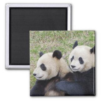 Wolong Reserve, China, Giant panda hugging Magnet