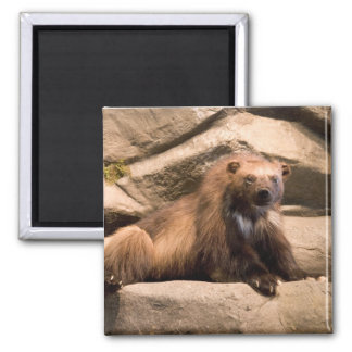 Wolverine 2 Inch Square Magnet