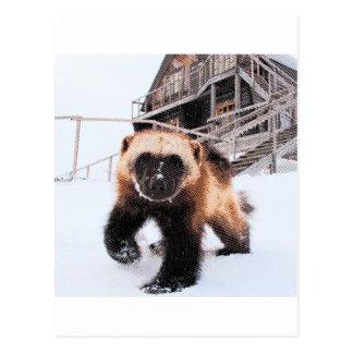 Wolverine grabado postales