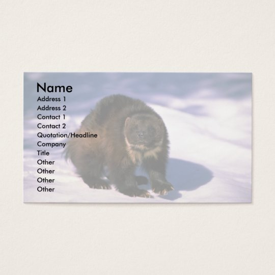Wolverine on snow business card