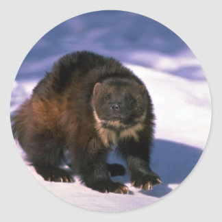 Wolverine on snow classic round sticker