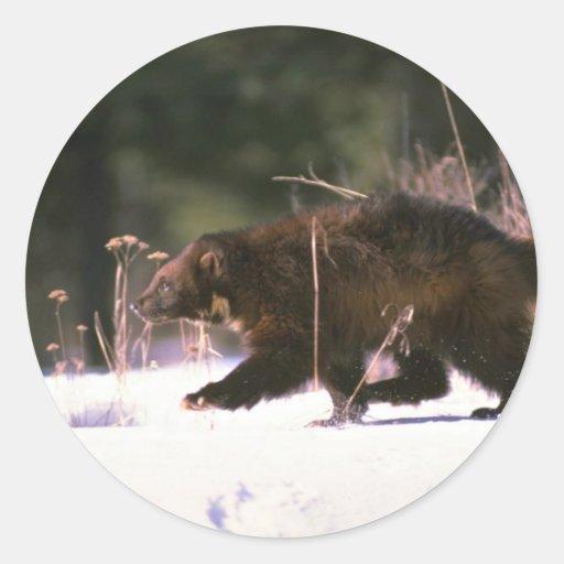 Wolverine running through snow round sticker