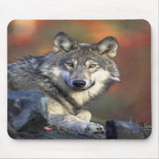 Wolves Canis_lupus_Grey Wolf Mouse Mats