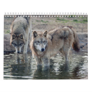 Wolves Grey Wolf Calendar