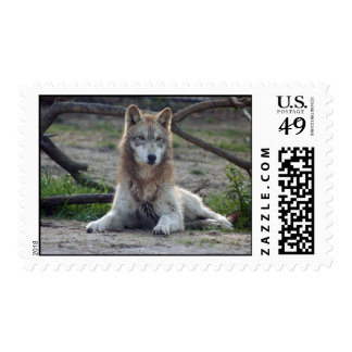 Wolves Grey Wolf Postage Stamps