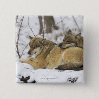 Wolves in the Bawarian Wood Button
