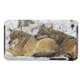 Wolves in the Bawarian Wood iPod Case-Mate Case