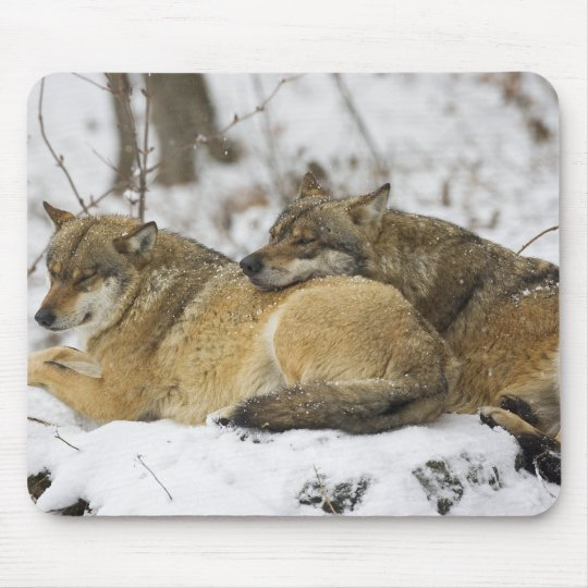Wolves in the Bawarian Wood Mouse Pad