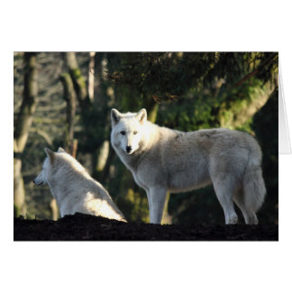 Wolves in the Forest Card