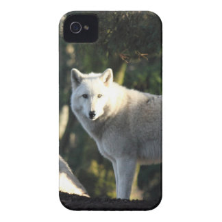 Wolves in the Forest iPhone 4 Case