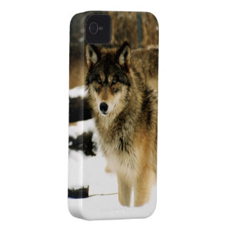 Wolves in The Snow iPhone 4 Case-Mate Case