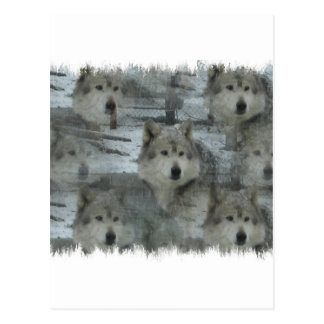 Wolves in the Wild Postcard