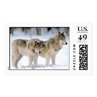 Wolves in winter wild life postage stamp
