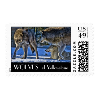 Wolves Of Yellowstone Postage