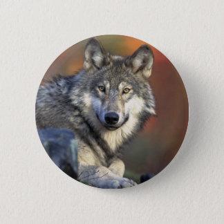 Wolves Pinback Button
