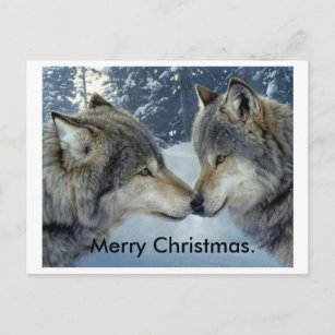 Christmas Wolf.Wolves Rubbing Noses Merry Christmas Post Cards Holiday Postcard