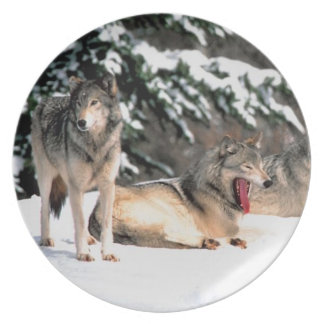 Wolves Wildlife  Photography Plate