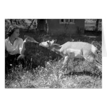 Woman bottle feeding an antelope cards