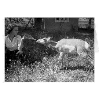 Woman bottle feeding an antelope card