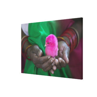 Woman holding a little chick painted with holy canvas print