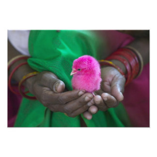 Woman holding a little chick painted with holy photograph
