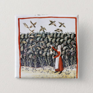 Woman Protecting her Crop of Millet Pinback Button