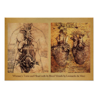 Woman's Torso / Heart And Its Blood Vessels Poster
