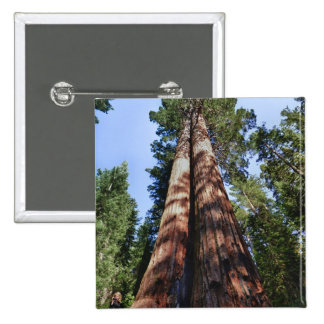 Woman videotaping at base of massive Sequoia 2 Inch Square Button