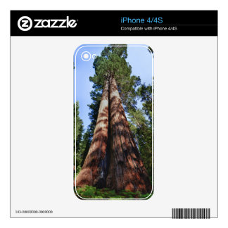 Woman videotaping at base of massive Sequoia Decals For iPhone 4