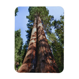 Woman videotaping at base of massive Sequoia Magnet