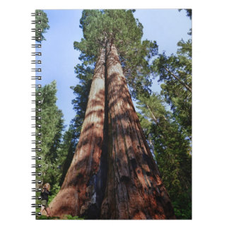Woman videotaping at base of massive Sequoia Spiral Notebook