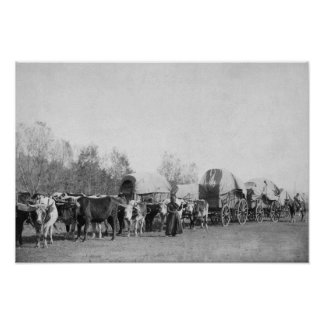 Woman with Ox Train Holds a Whip Photograph Posters