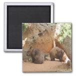 Wombat Heaven Fridge Magnet