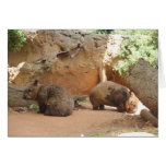 Wombat Heaven Greeting Card