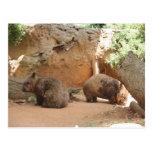 Wombat Heaven Postcard
