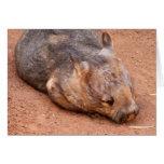 Wombat Melenudo-Sospechado meridional Felicitacion