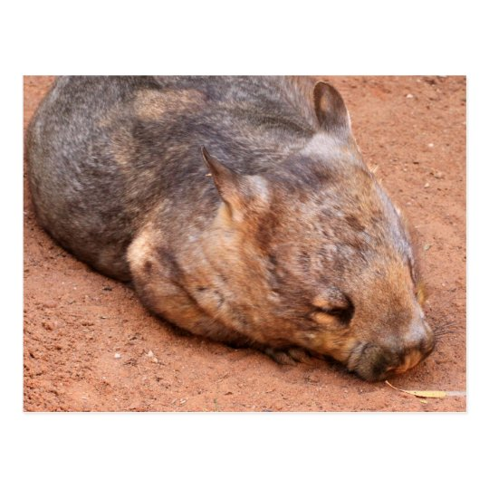 Wombat Melenudo-Sospechado meridional Tarjetas Postales