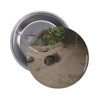 Wombat Pins