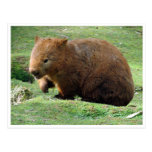wombat postcard