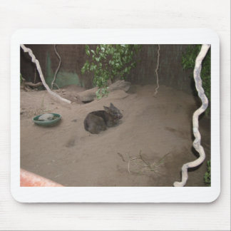 Wombat Tapetes De Raton