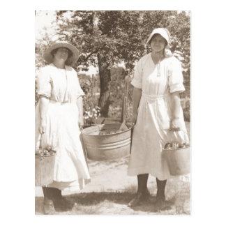 Women Picking Apples Postcard