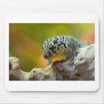 wonder-gecko-2560 alfombrilla de ratones