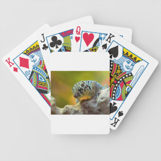 wonder-gecko-2560 bicycle playing cards
